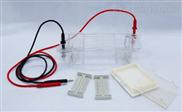 DYCP-31CN型 瓊脂糖水平電泳儀(槽)