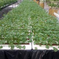 温室大棚 DFT深液流 无土栽培 水培种植设备