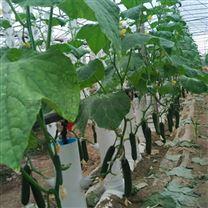 温室无土栽培立柱式水培管道立体栽培柱