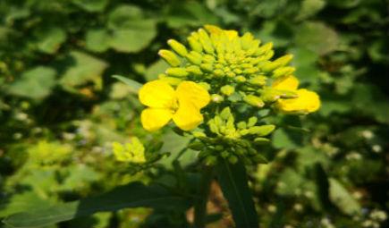 大豆種業專家論壇在哈爾濱召開