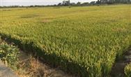 美國科學家預測未來農業發展的五大方向