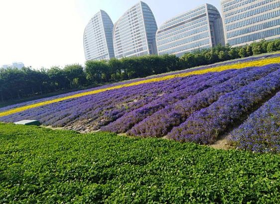 京东与高通合作共同推进5G技术升级